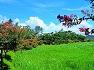 경주 서출지 배롱나무꽃