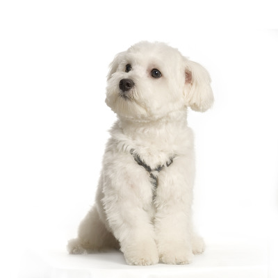 Different Haircuts For Small Dogs