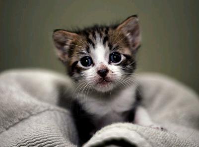 고양이에 관한 꿈
